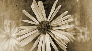 14-flower-vintage-texture