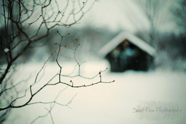 Favim.com-building-retro-shack-snow-tree-120160